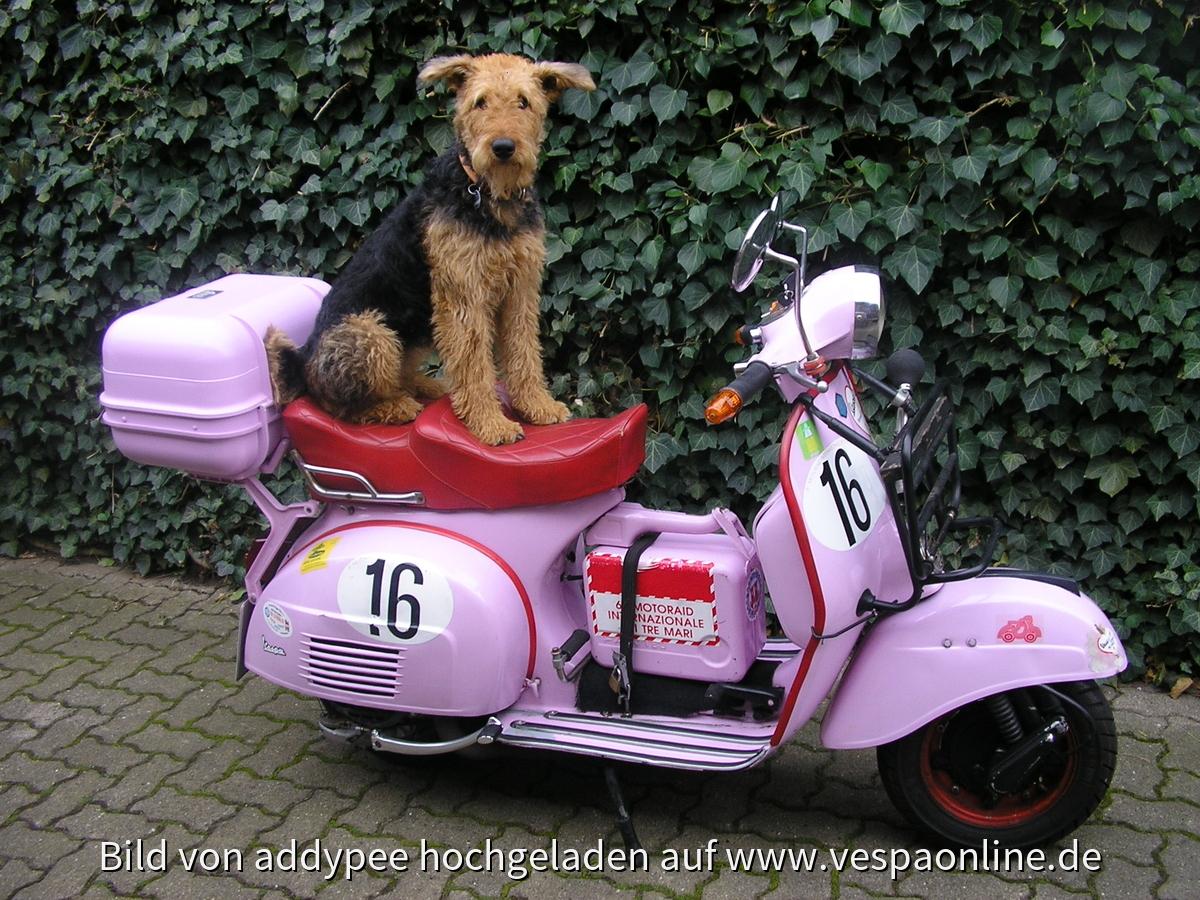 Mein Roller mit Hund